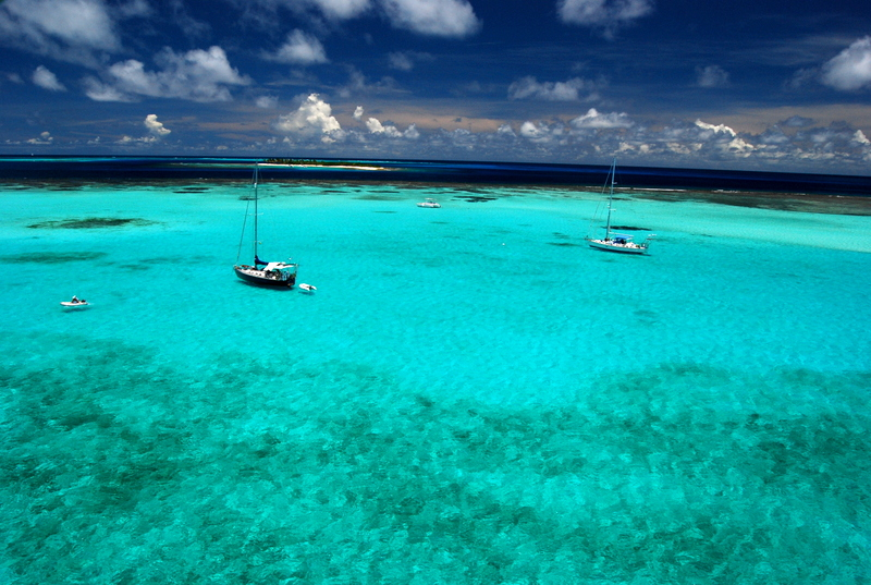 Tiburon Coralino, Tobago Cays.